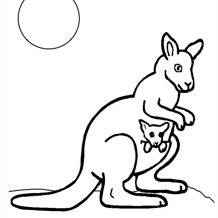 Dessin de kangourou 2 - Kangourou coloriage ...