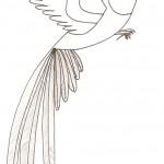 dessin de quetzal