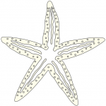 dessin d'etoile de mer