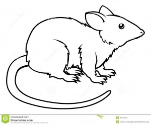 illustration de rat