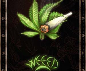 image de weed