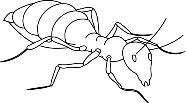 Dessin de fourmi 2 - Comment dessiner une fourmi ...