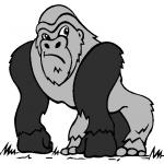 dessin de gorille