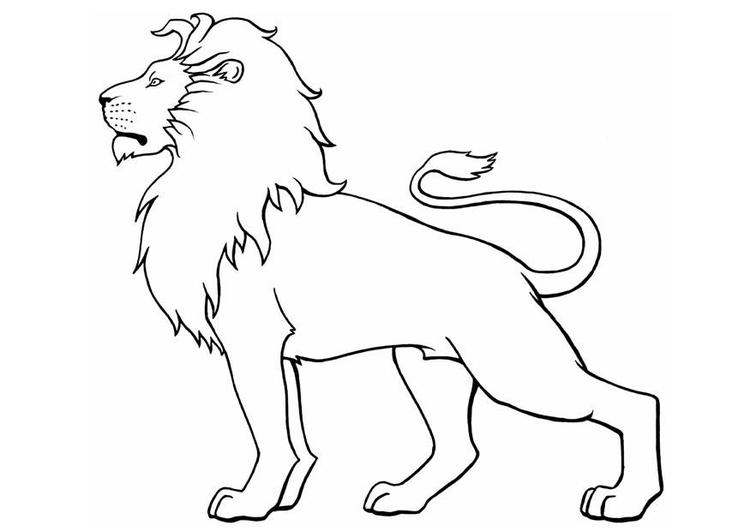 dessin de lion (6)