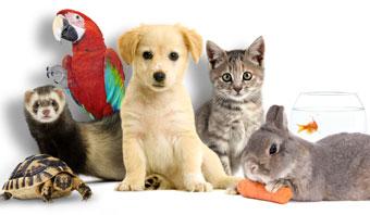 image de animaux