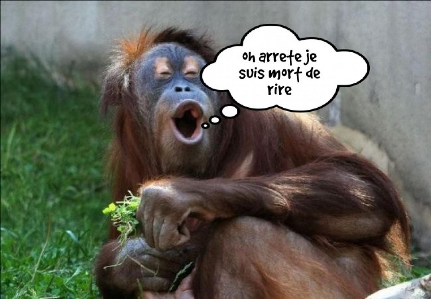image de rire (6)