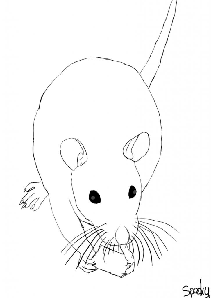Dessin De Rat 5