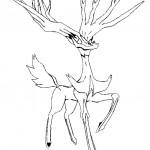 dessin de xerneas