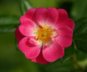 image de fleur
