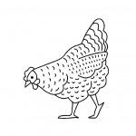 dessin de poule