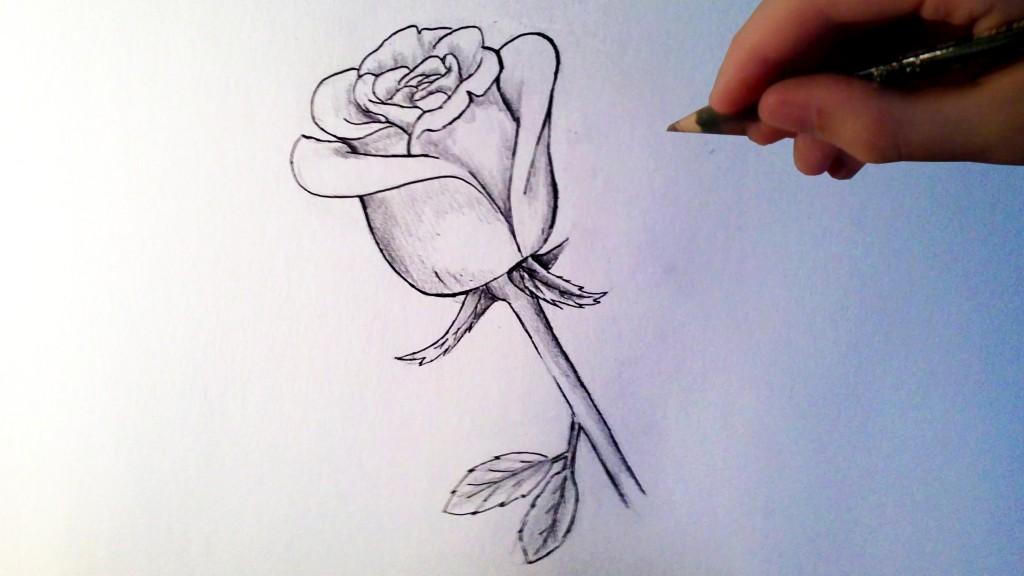 dessin de rose