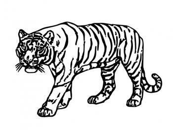 Dessin de tigre - Dessin de tigre facile ...