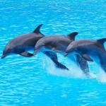 image de dauphin