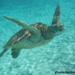 image de tortue