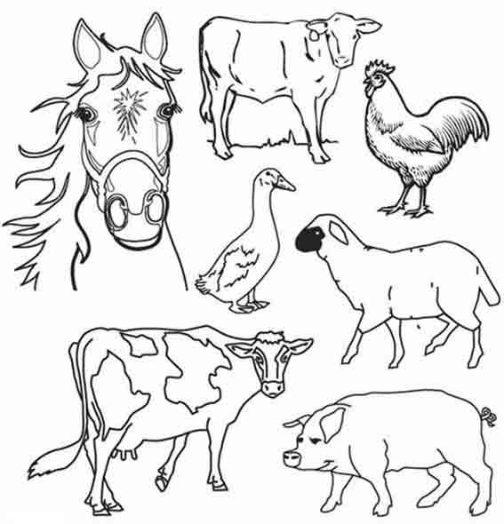 Dessin d animaux de la ferme 2 - Dessin d animeaux ...