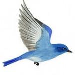 illustration de l oiseau bleu