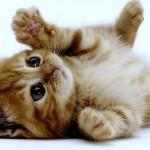 image de chaton