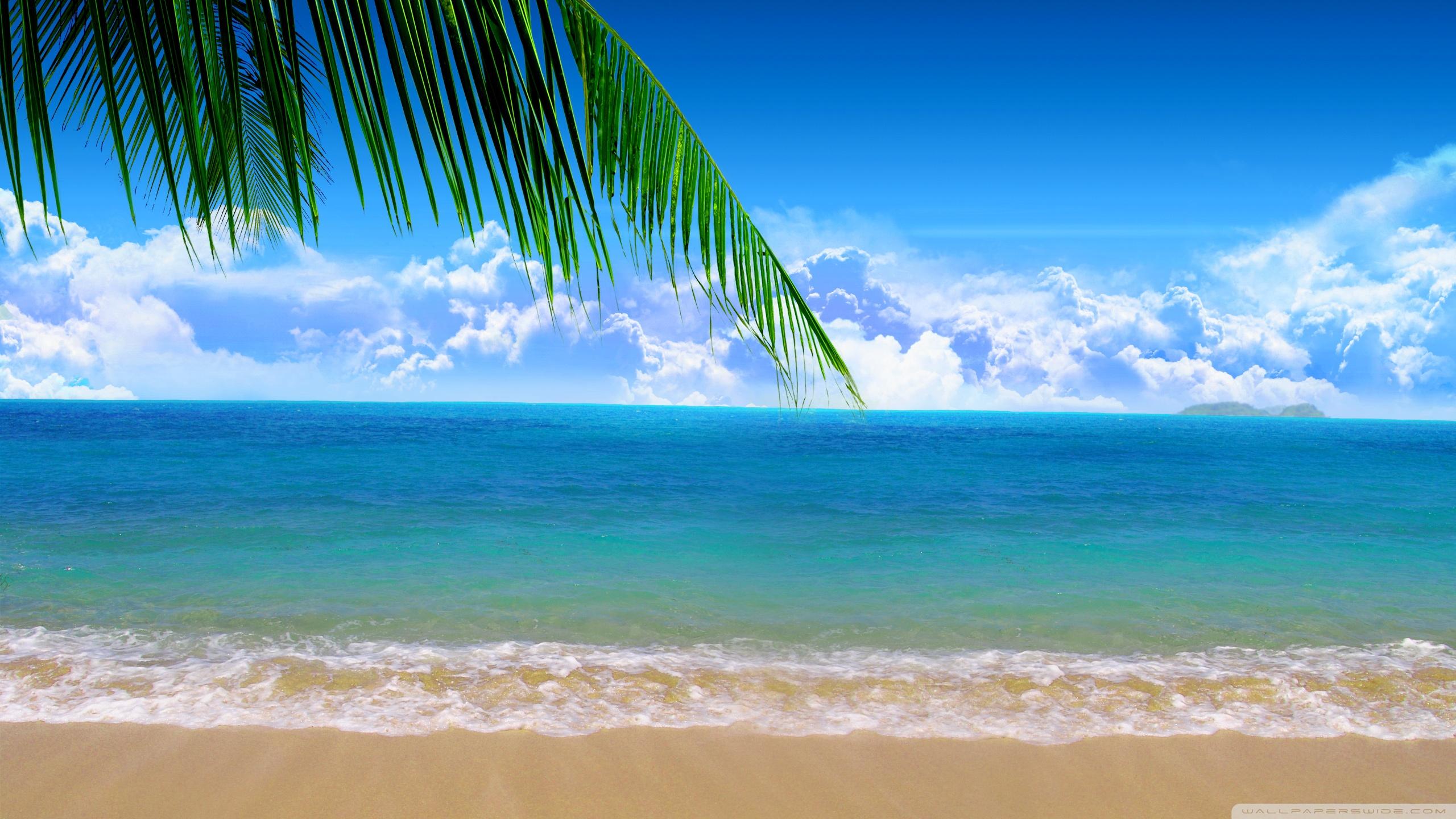 Shore Palms Tropical Beach 4k Hd Desktop Wallpaper For 4k: Image De Mer (8