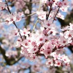 image de printemps