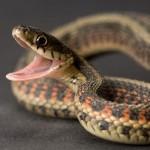 image de serpent