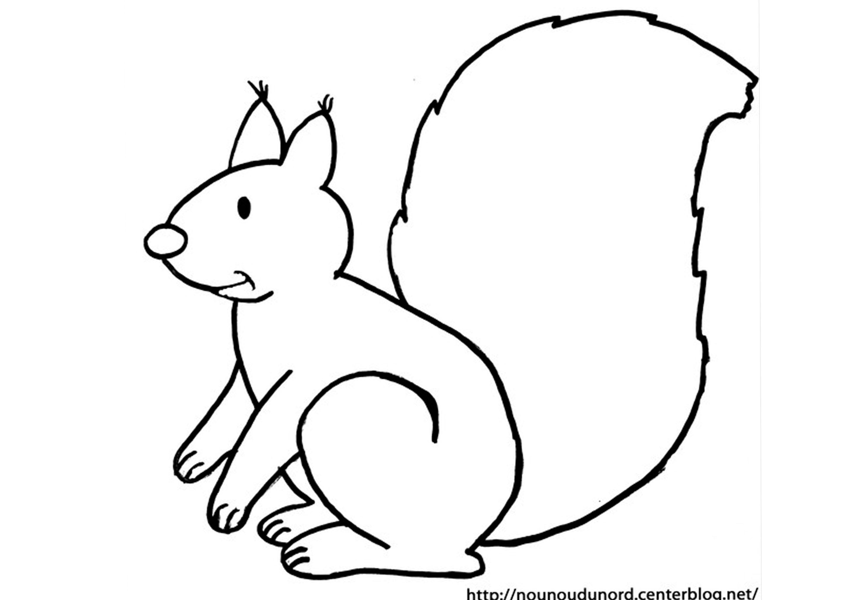 dessin de ecureuil (3)