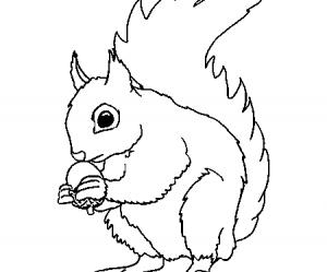 dessin de ecureuil