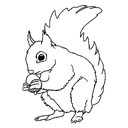 Dessin de ecureuil - Ecureuil a dessiner ...