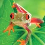 image de grenouille