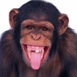 image de singe