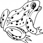 dessin de grenouille