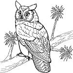 dessin de hibou