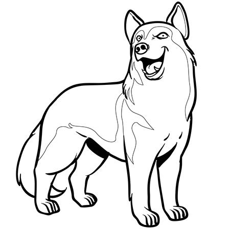 Dessin de husky 7 - Coloriage chien de traineau ...