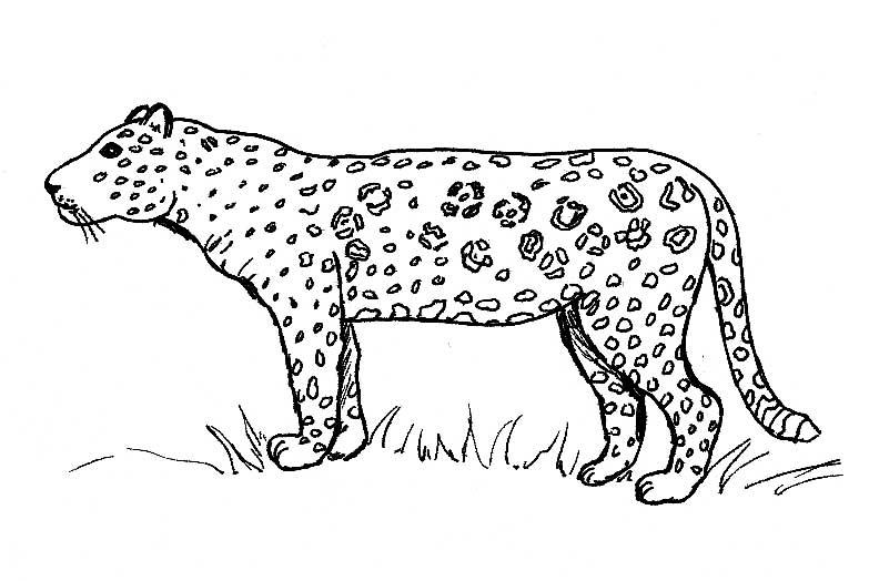 Dessin De Jaguar 2