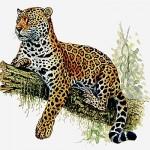 dessin de jaguar