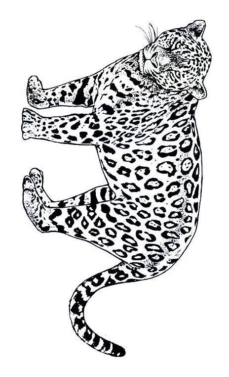 Dessin De Jaguar 9
