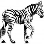 dessin de zebre