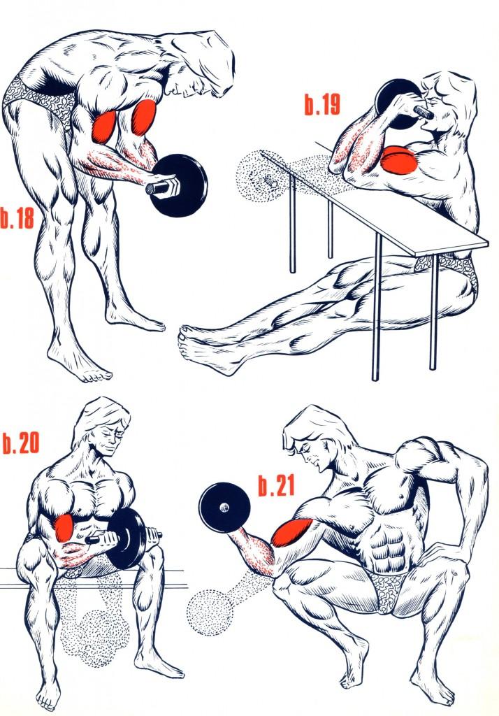 illustration exercices de musculation