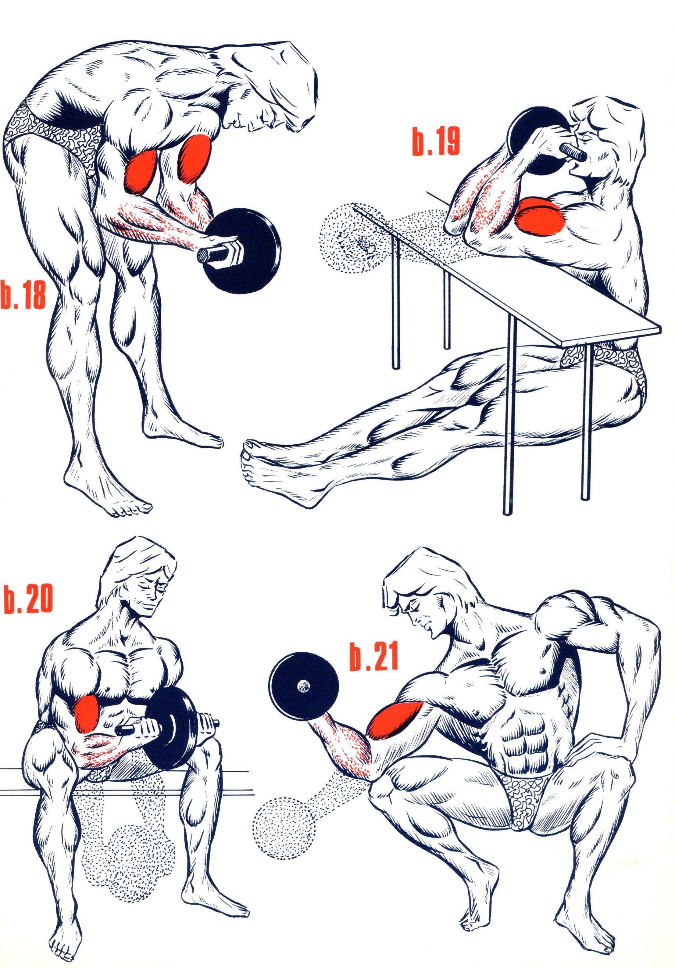 illustration exercices de musculation (3)