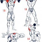 illustration exercices de musculation