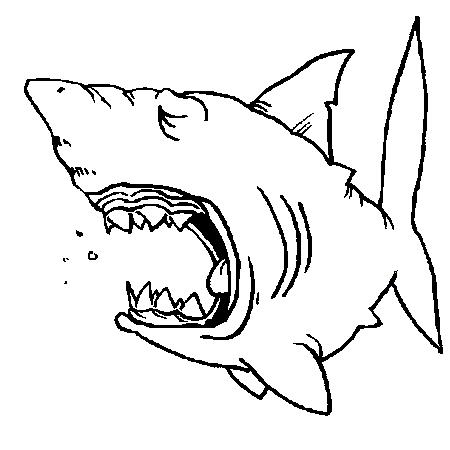 Dessin de requin 3 - Modele dessin requin ...