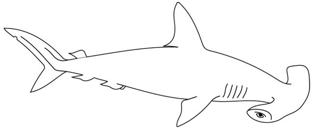 Dessin de requin 6 - Modele dessin requin ...