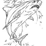 dessin de requin