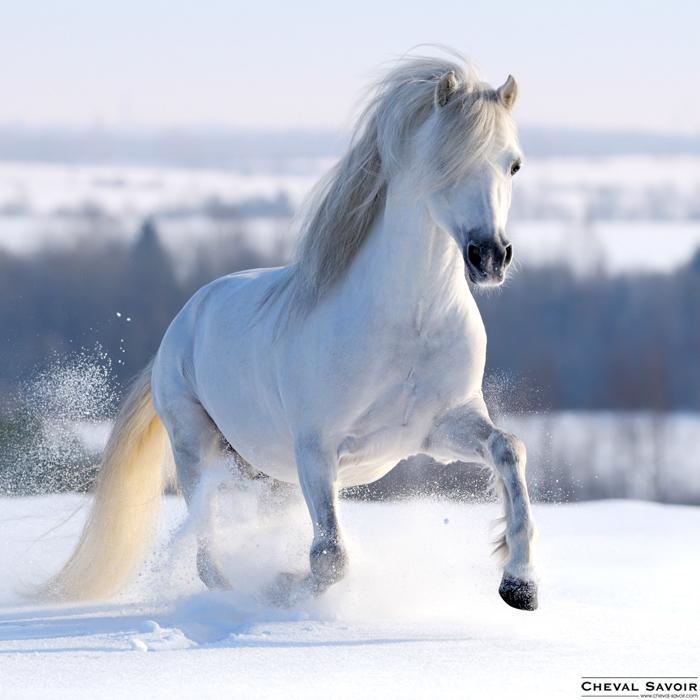 siteducheval : tout sur le cheval, annonces, images et tout sur les races