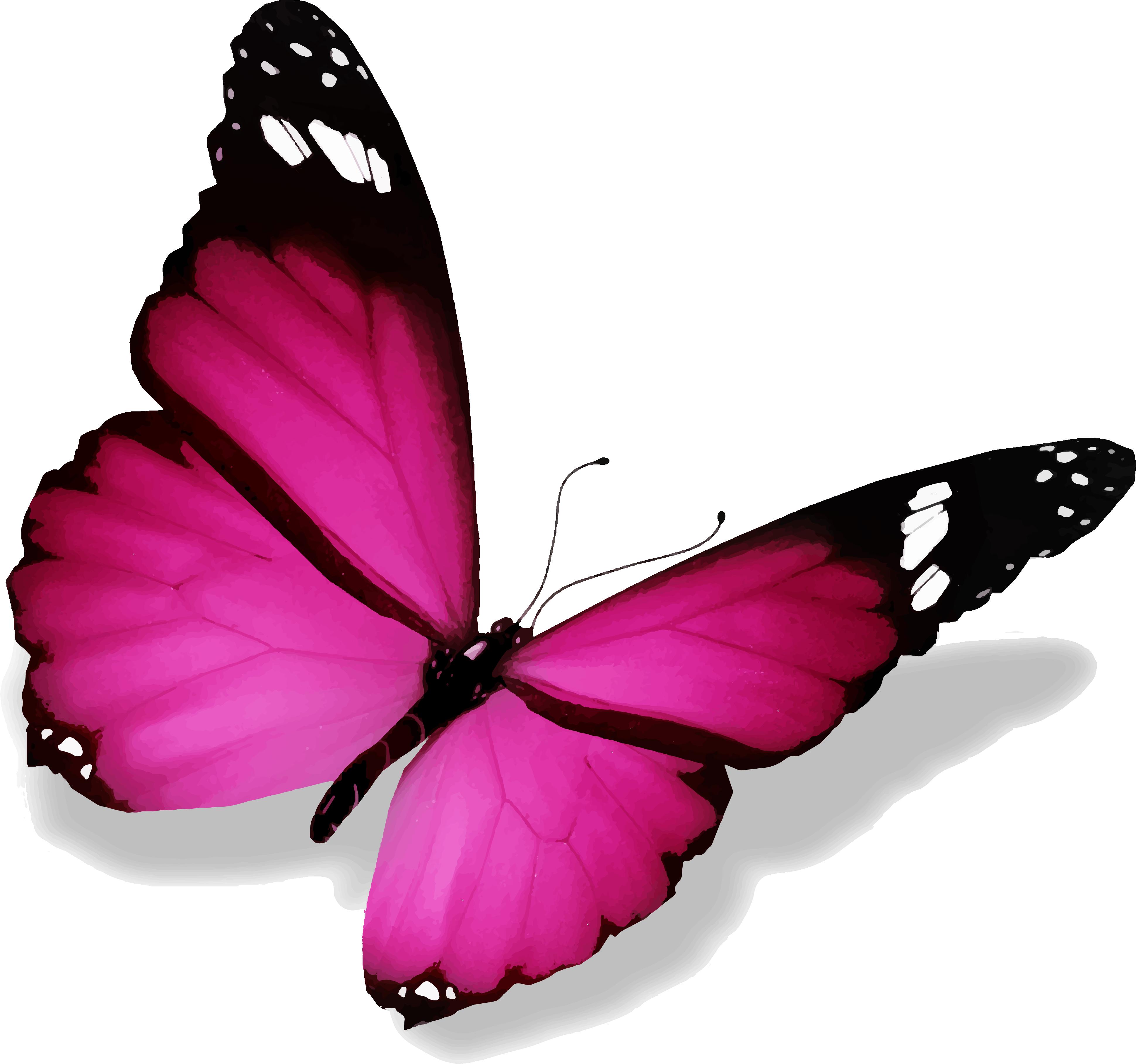Image de papillon 6 - Image papillon dessin ...