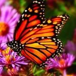 image de papillon