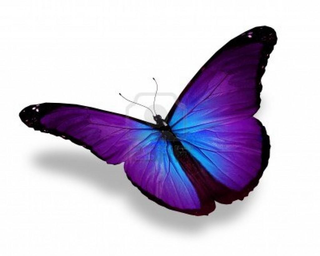 image de papillon 9 - Image De Papillon