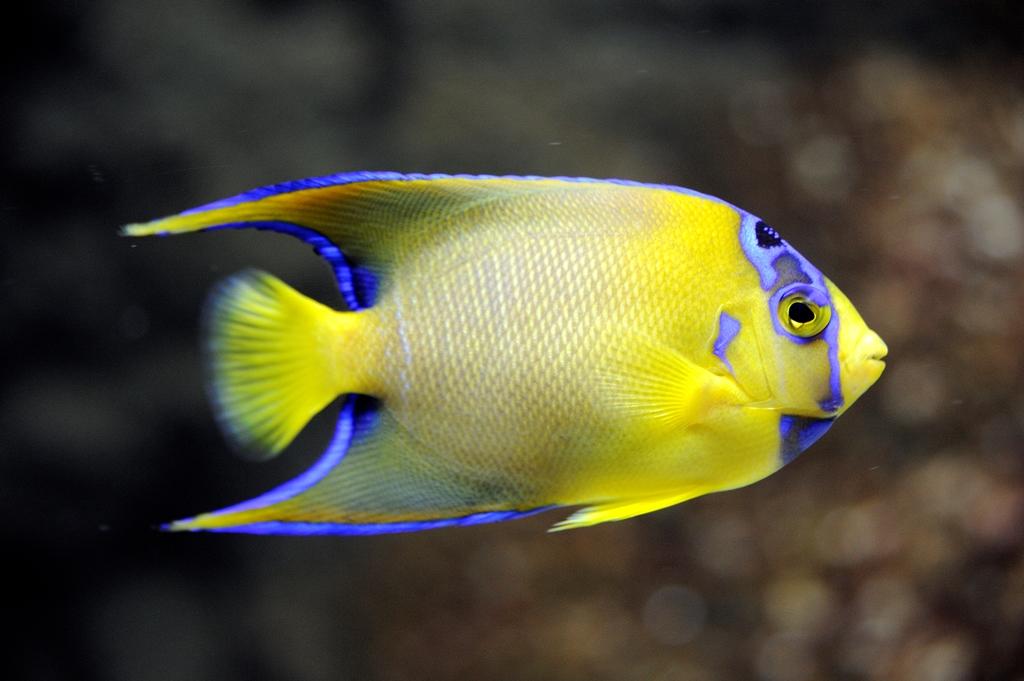Image de poisson 6 - Image de poisson a imprimer ...